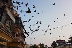 Goa-2019-Image-18